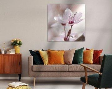 Frühlings Impressionen einer Kirschblüte von Tanja Riedel