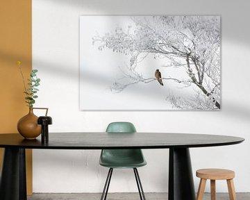 torenvalk in berijpte boom van Contrast inBeeld
