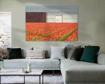 Rode tulpen in een strakke omlijsting van Remco Swiers