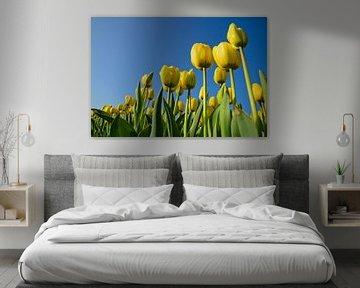 Gele tulpen, blauwe luchten van Remco Swiers