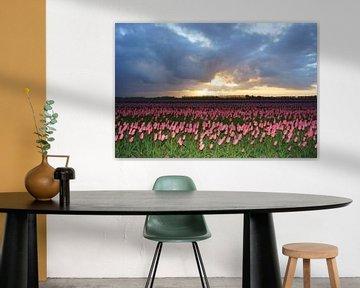 Tulpen op Goeree-Overflakkee von Michel van Kooten