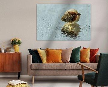 Sea shell van Irene Lommers