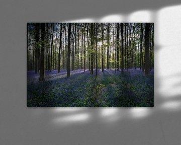Zonnestralen verlichten het bos von Menno Schaefer