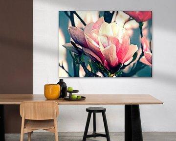Fleur de magnolia sur Roswitha Lorz