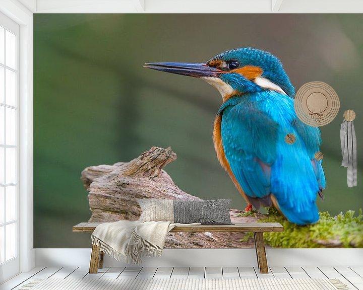 Sfeerimpressie behang: IJsvogel op zijn hoede van IJsvogels.nl - Corné van Oosterhout