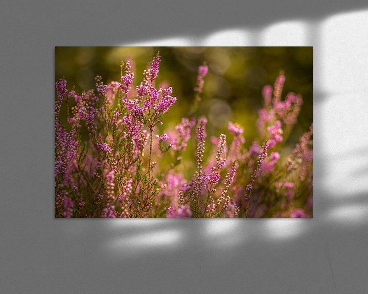 Sfeerimpressie: Heide in bloei van Tux Photography