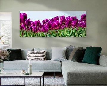 Tulpen panorama van PvdH Fotografie