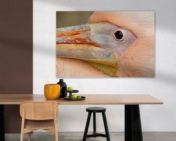 Close-up van een pelikaan sur Marco Weening