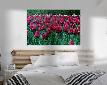 Rode Tulpen. von Melanie Schook