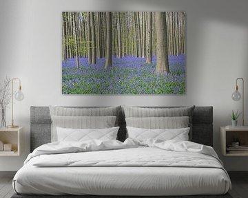 Blauwe hyacinten in een beukenbos van Barbara Brolsma