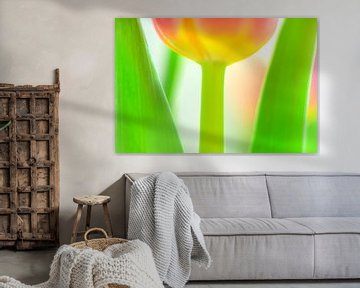 Color your life IX von Richard Marks