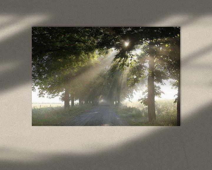 Sfeerimpressie: zonneschijn van Kaa. M