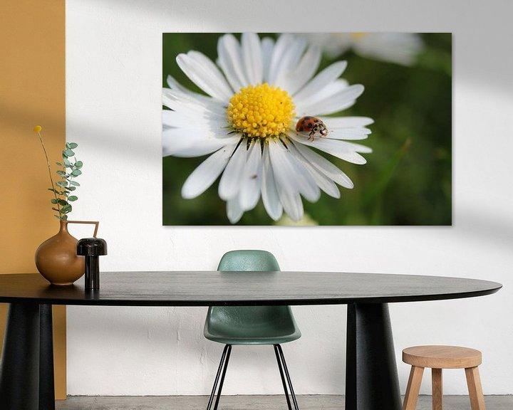 Sfeerimpressie: madelieveheersbeestje van Kaa. M