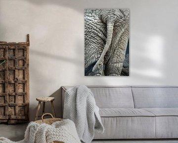 Rump eines Elefanten  von Jolanta Mayerberg