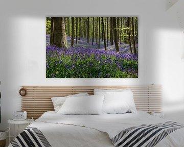 Wilde hyacinten in het Hallerbos von Bart van Dinten