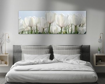 Witte tulpen van Franke de Jong
