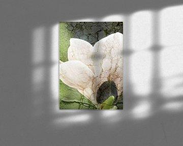 Magnolie mit Textur van Roswitha Lorz
