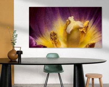 paarse tulp met gele kern von mick agterberg