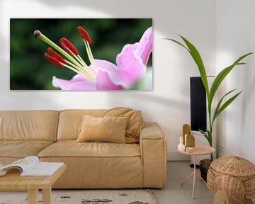 Roze lelie van Rob Hendriks
