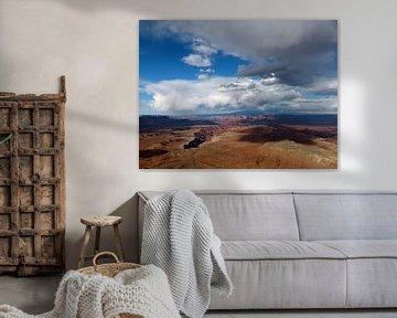 Canyonlands National Park USA van bird bee flower and tree
