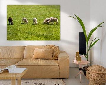 Lammetjes op ee rij von Marcel van der Voet