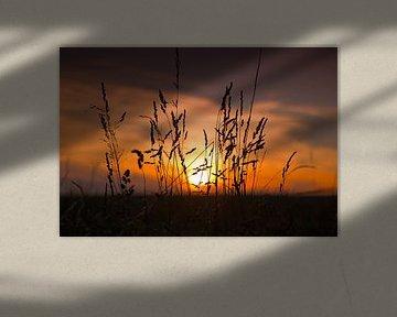 Mais mit Sonnenuntergang