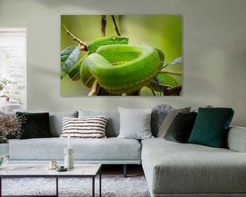 Groene adder van Richard Guijt Photography