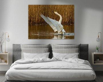 De Wilde Zwaan slaat haar vleugels uit.. van Rob Smit