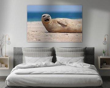 Blije zeehond