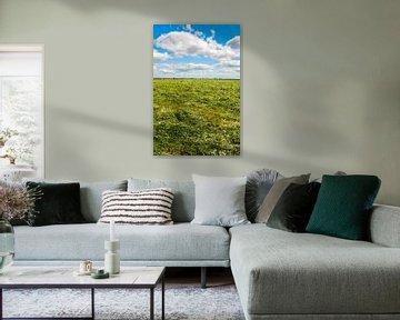 Gemaaid gras von Richard Janssen