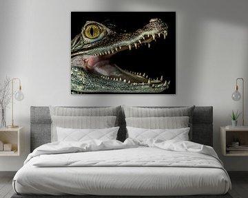 """Krokodilen: """" Ik lust wel een lekker hapje"""""""