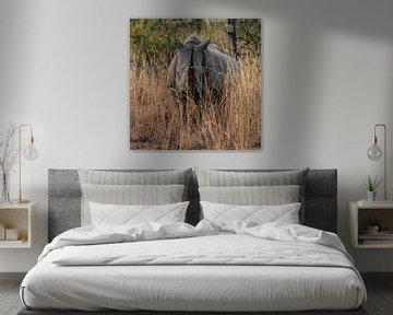 Neushoorn (Rhinocerotidae): Ik zie jou!