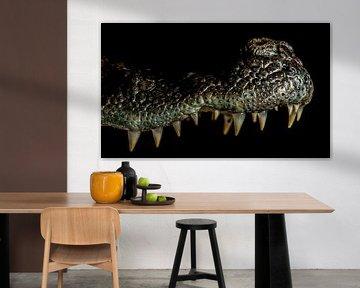 Krokodillen: close up bovenkaak