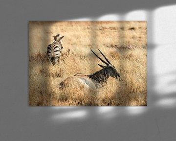 Antilope: Eten sur Rob Smit