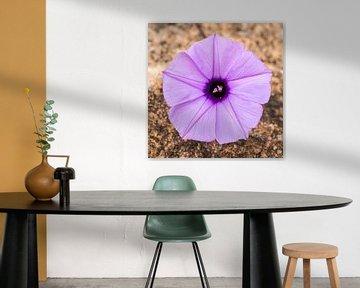 Bloem: Purple heart von Rob Smit