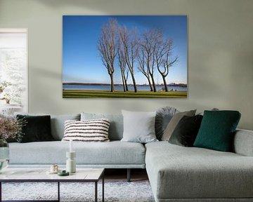 Bomen aan de Rotterdamse Kralingse Plas