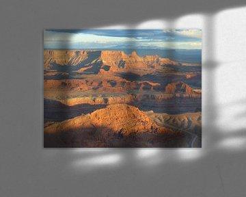 Uitzicht Canyonlands National Park van bird bee flower and tree
