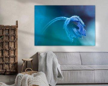 Wildemanskruid met dauwdrupeltjes blauw. van bird bee flower and tree