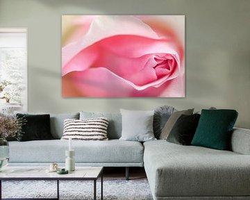 Rose von Karin van Hengel