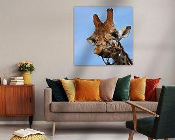 Giraffe van san image