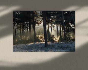 Zonnestralen verwarmen winters landschap van Menno Bausch