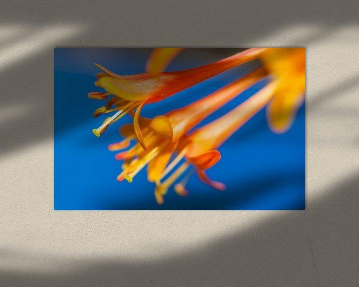 Sfeerimpressie: Oranje bloemen op blauwe achtergrond van Maerten Prins