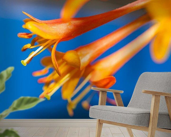 Sfeerimpressie behang: Oranje bloemen op blauwe achtergrond van Maerten Prins